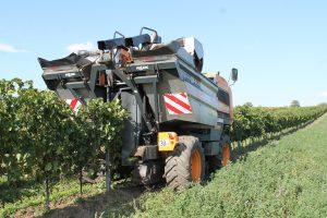 produzione del vino - cimatura meccanica