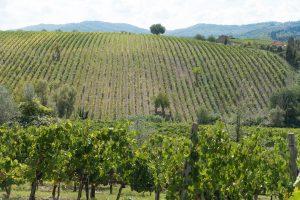 produzione del vino - collina