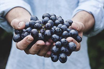 Alla scoperta del Vino Malbec