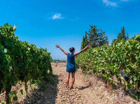 Strada-vino-Sicilia